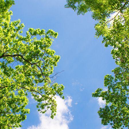 LED panel s motivem stromů 48W 3300lm 60x60 cm denní