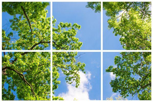 Sada 6 LED panelů s motivem stromů 48W 3300lm 60x60 cm denní